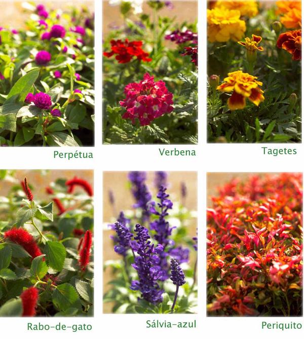 Forrações para vasos e jardins