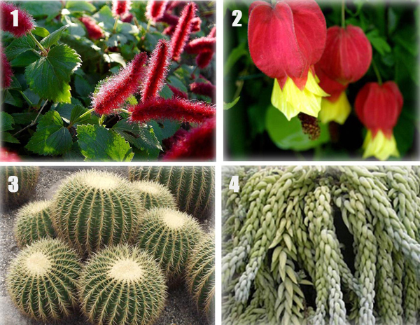 net » Blog Archive » plantas ornamentais brasil harri lorenzi