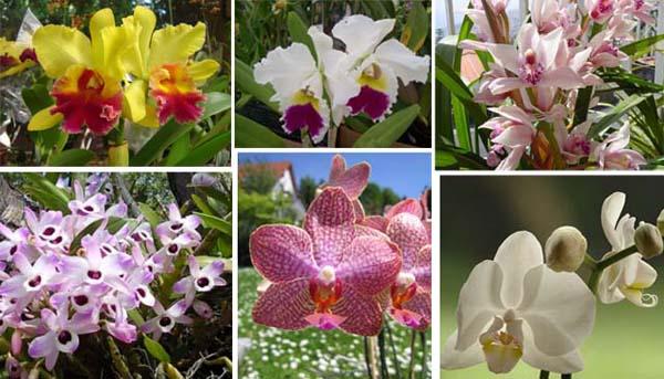 No mundo das orquídeas