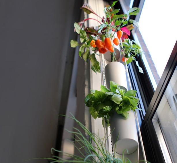 Hortinha em casa: em tamanho reduzido, cabe até em apartamento