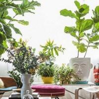 Casa verde e florida