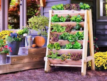 saiba como montar e manter uma horta dentro de casa para cultivar legumes orgânicos