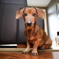 Regras para criação de animais de estimação em condomínios