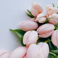 Namoro que Floresce