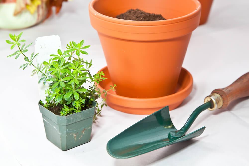 Imagem com vazo e planta e uma pá para plantar