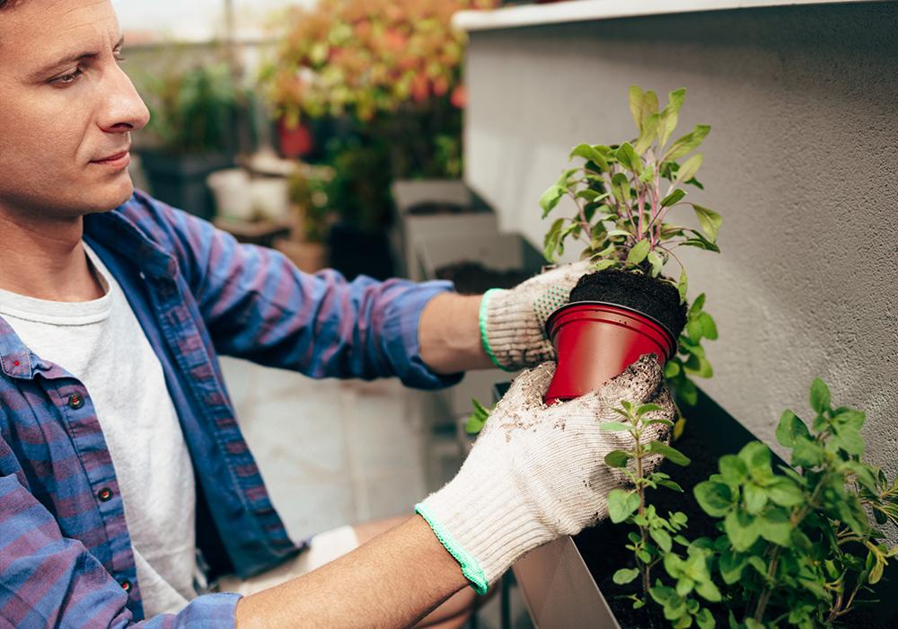 homem cuidando das plantas