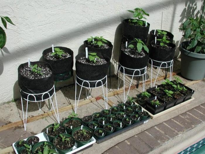 Imagem de uma horta feita em vasos