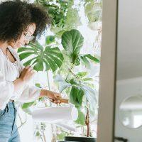 Plantas em apartamento: como usar
