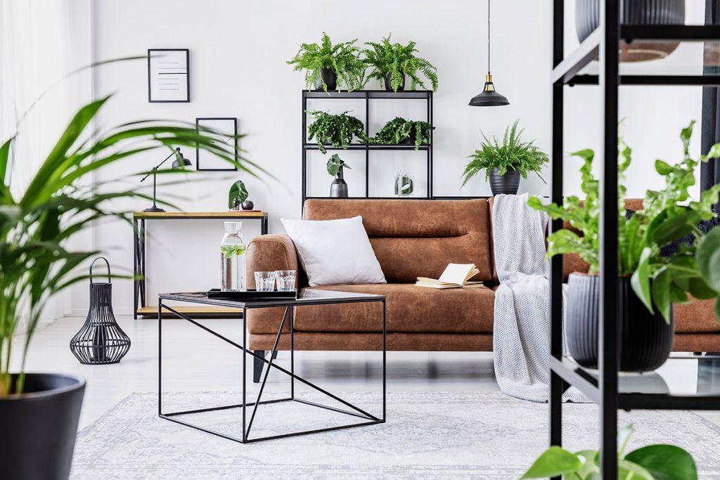 Ambiente com varias plantas decorando